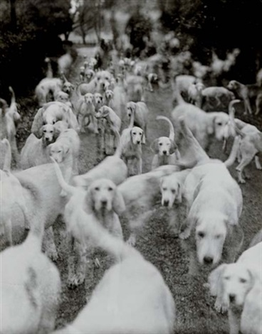 lady curres itton fox hounds vogue february 1951 by norman parkinson