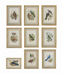 nine handcoloured lithographs (from birds of new guinea and the adjacent papua islands, published by j. gould, london) by john gould