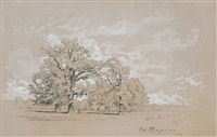 oak by david johnson