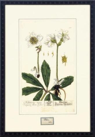 herbarium blackwellianum emendatum et auctum 6 works by nikolaus freidrich eisenberger by elizabeth blackwell