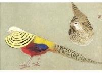 golden pheasant by kayo yamaguchi