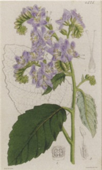 the botanical magazine or flower garden displayed by walter hood fitch