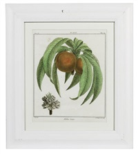 fruit species (+ 11 others; 12 works) by henri louis duhamel du monceau