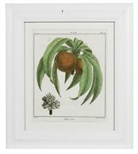 fruit species (+ 11 others; 12 works) by henri louis duhamel du monceau