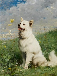 portrait of a german spitz by julius adam (unattributable)