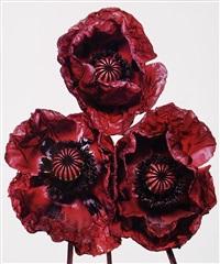 three poppies, arab chief, new york by irving penn