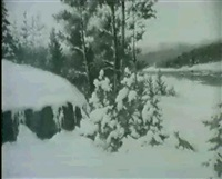räv i vinterlandskap by gumme akermark