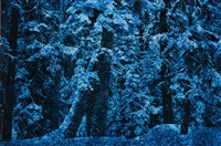 blue winter, yosemite national park, ca by ernst haas