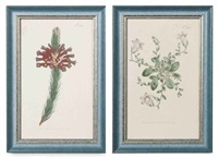 flowers (20 works) by william curtis