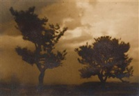 trees by josef sudek
