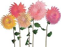 dance hall girl #12 (chrysanthemums) by jennifer steinkamp
