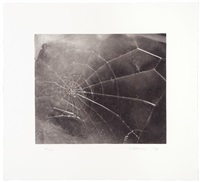web by vija celmins
