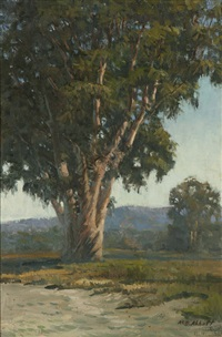 lone eucalyptus by meredith brooks abbott