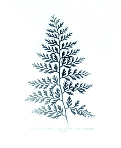 fern by william henry fox talbot