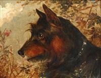 head of a terrier by edward aistrop