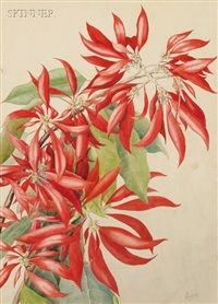 poinsettia by wilhelmina f. greene