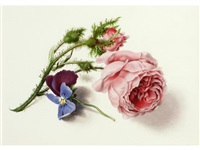 flower studies (set of 3) by james holland