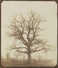 oak tree in winter by william henry fox talbot