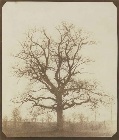 oak tree in winter by william henry fox talbot
