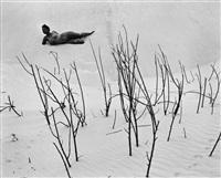 nude on dunes by edward weston