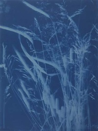 rye, blue grass (+ pepperberries, california; 2 works) by bertha jacques