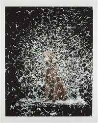 blizzard by william wegman