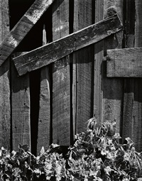 boards and thistles, san francisco, california by ansel adams