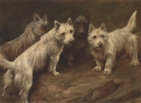 four cairn terriers by fannie moody