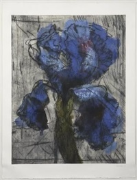 dutch iris (first version) by william kentridge