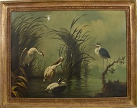 shorebirds in tropical landscape by ira monte