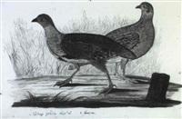 vögel nach der natur gemalt von i.h. by j.c. hohnbaum