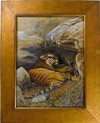 tiger (+ print; 2 works) by william willoughby hooper