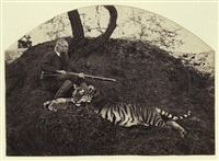 portraits of tiger trophies (pair) by wallace willoughby hooper