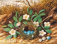 bird's nest (with blue eggs) and flowers by william m. cruikshank