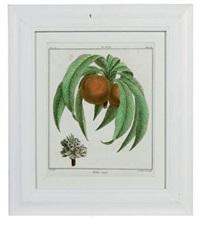 fruit species (set of 12) by henri louis duhamel du monceau