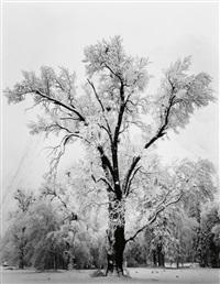 oak tree, snowstorm, yosemite valley by ansel adams