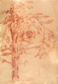 albero a sant'agata by libero andreotti
