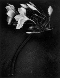 orchid by albert watson