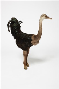 ostrich/rooster/donkey (from the misfits series) by thomas grünfeld