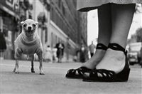 a portfolio of ten photographs, featuring the photographer's iconic pictures by elliott erwitt