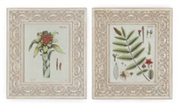 botanicals (study) (10 works) by nicolaus joseph von jacquin