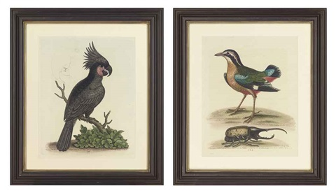 ornithological studies (from a natural history of uncommon birds; set of 12) by george edwards