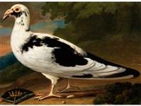seltene, für die geschichte der zoologie bedeutende wiedergabe einer exotischen taube by anonymous-british (18)