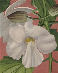 orchid by kyra markham