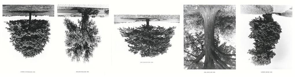 flanders trees (portfolio of 5) by rodney graham