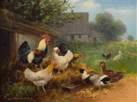hühner und enten by otto scheuerer