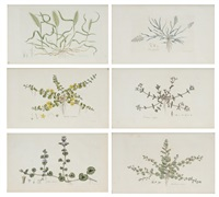 botanical plates 23, 33, 45, 93, 122, 134 from flora londinensis (6 works) by william curtis