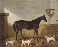 a favourite hunter and terriers in a stable by james (of bath) loder