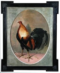 a black red carlisle old english game cock by eliot thomas yorke