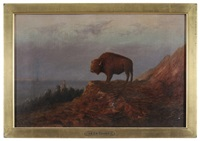 plains buffalo by astley david middleton cooper